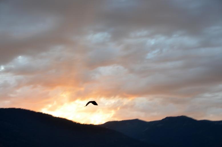 {july 25} eagle 3