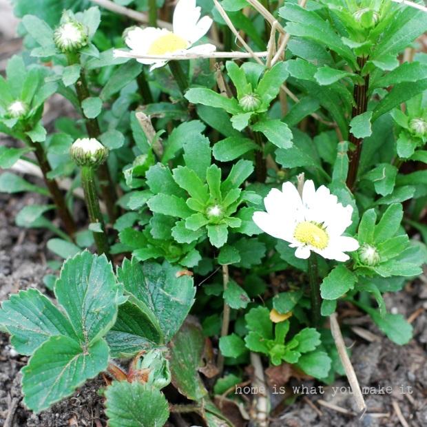 in the garden 22