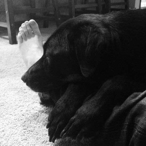 snuggles 3:2012