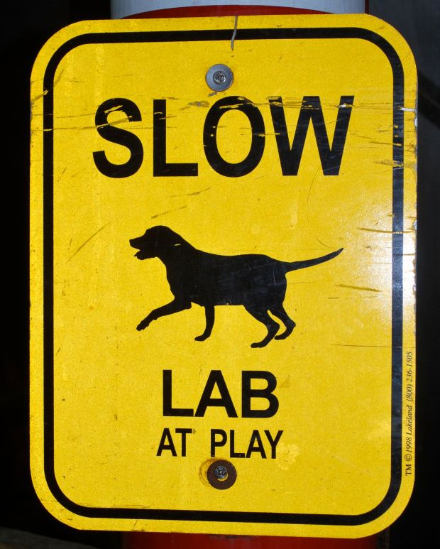 lab at play