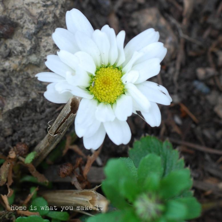 in the garden 23