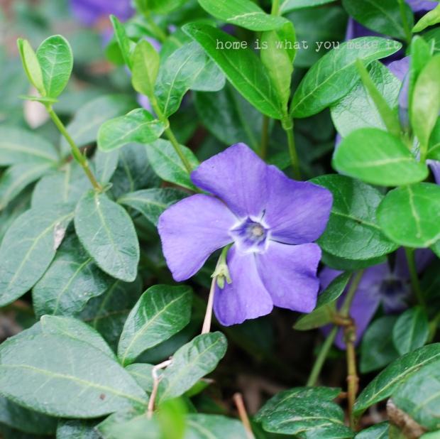 in the garden 28