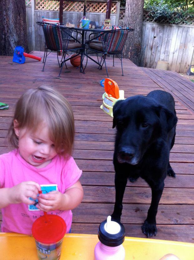 family dog 8:2011