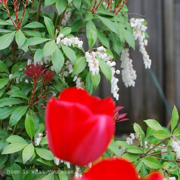in the garden 33